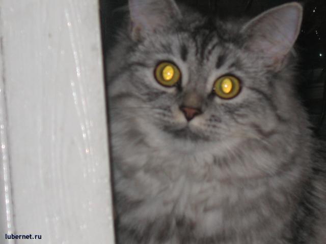 Фотография: моя мартышка, пользователя: Зетта