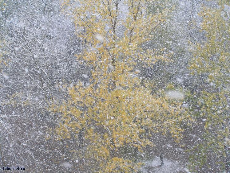 Фотография: и еще снегопад, пользователя: Малинка