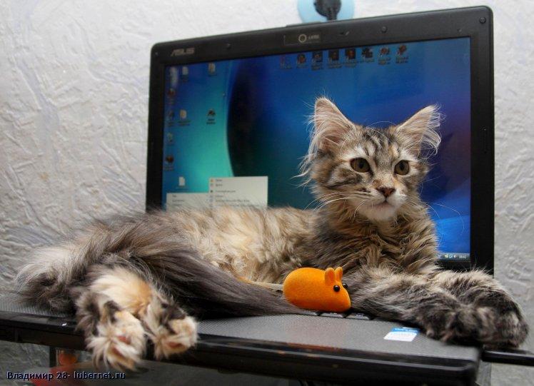 Фотография: Мейн кун 4 месяца, пользователя: 4IBIS