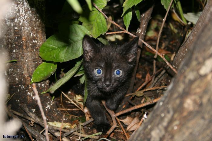 Фотография: Котёнок, пользователя: 4IBIS