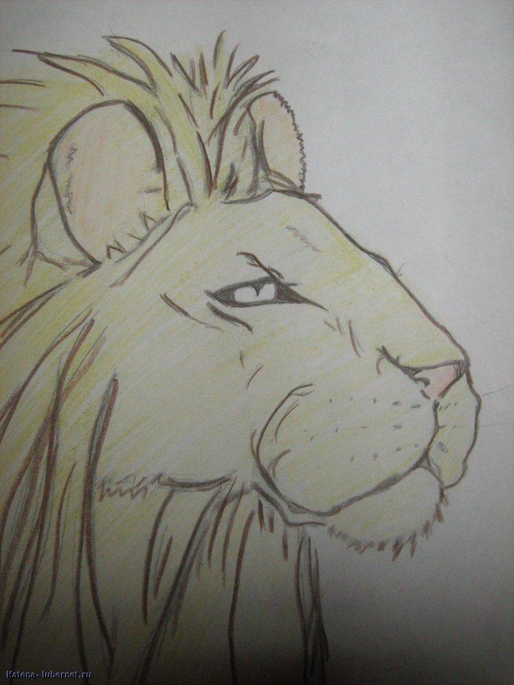 Фотография: лев, пользователя: Кatena