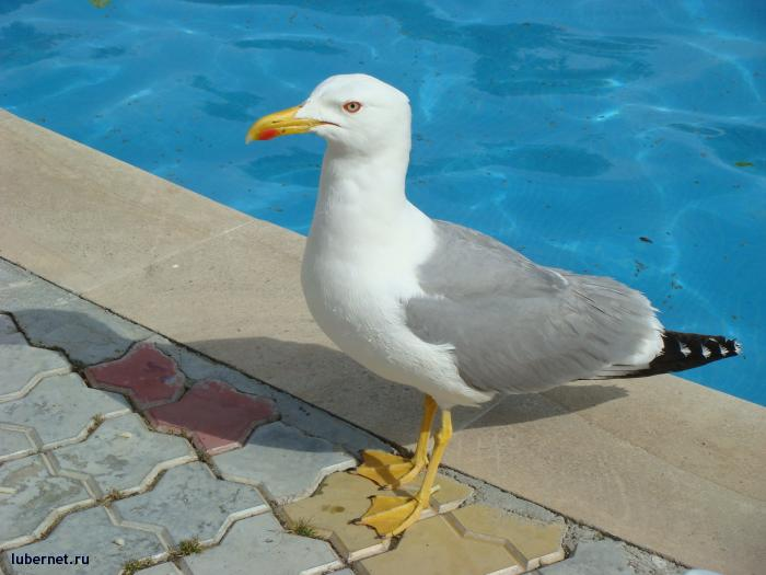 Фотография: Наглая чайка, пользователя: Джордж