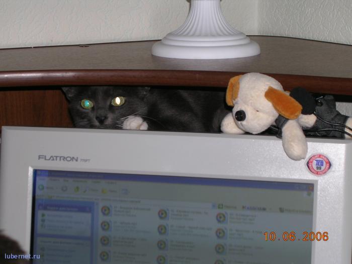 Фотография: кошка, пользователя: alla