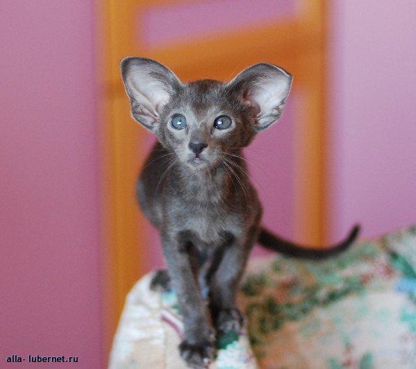 Фотография: Кошка.jpg, пользователя: alla