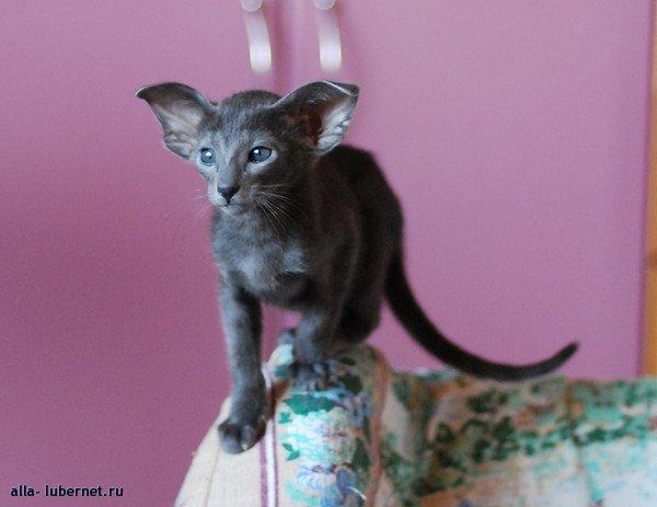 Фотография: Кошка11_.jpg, пользователя: alla