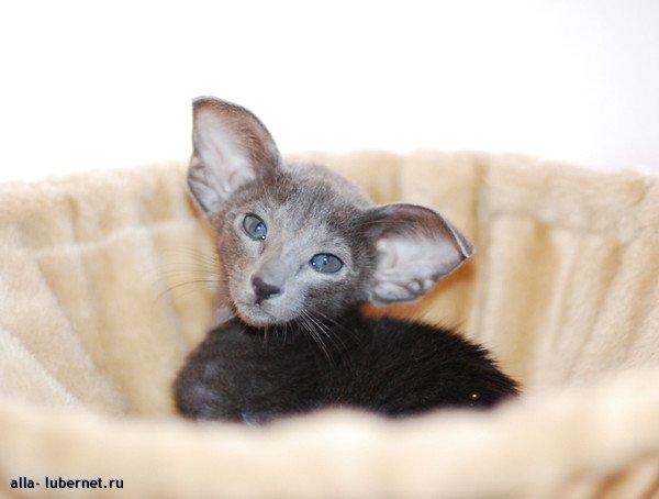 Фотография: Кошка5.jpg, пользователя: alla