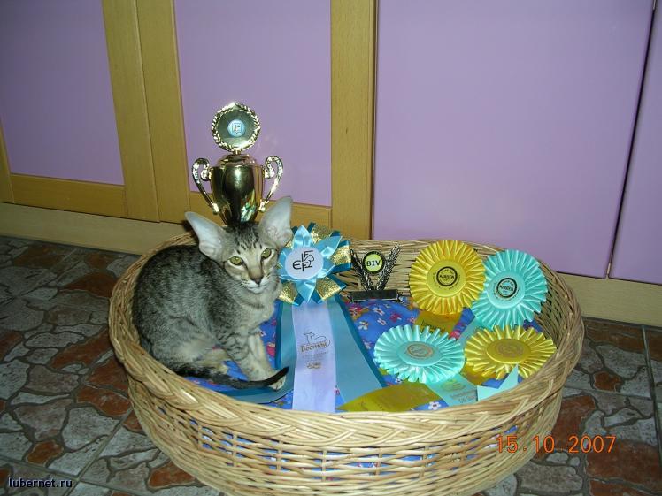Фотография: котенок, пользователя: alla