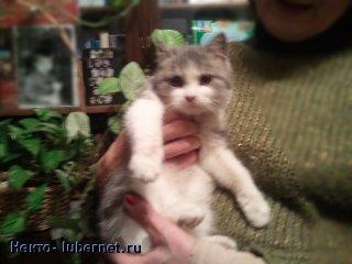 Фотография: Найденый котёнок.jpg, пользователя: Некто
