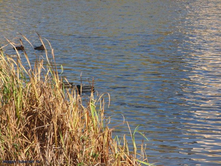 Фотография: Наташинские пруды. Утки, пользователя: Morgan