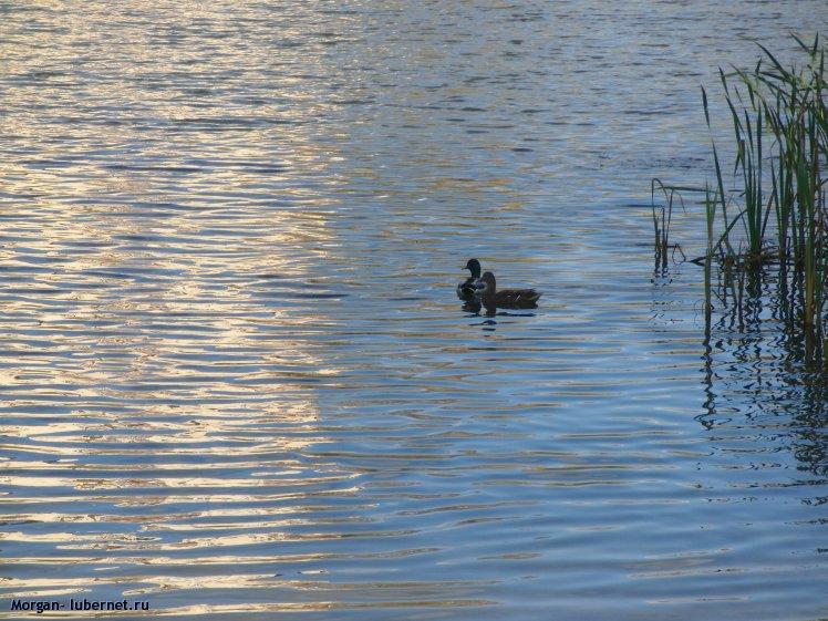 Фотография: Наташинские пруды. Парочка, пользователя: Morgan