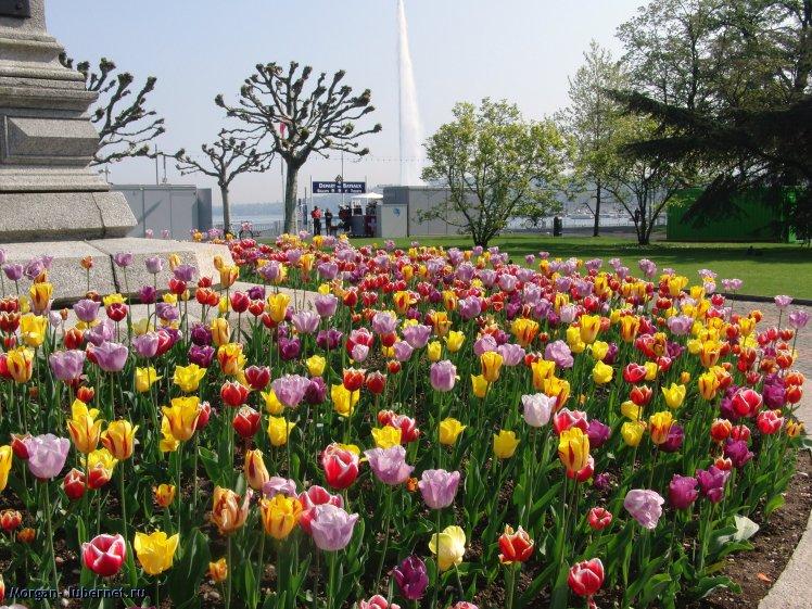 Фотография: Женева, пользователя: Morgan