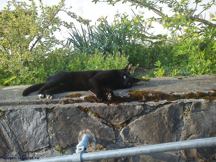 Фотография: Кот, пользователя: Morgan