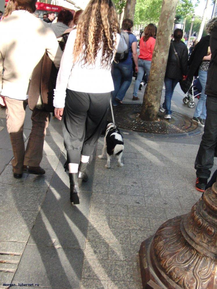 Фотография: Везде с собачками, пользователя: Morgan