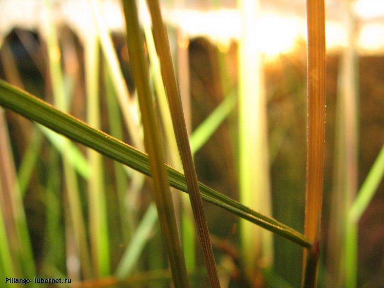 Фотография: IMG_7331.JPG, пользователя: Pillango