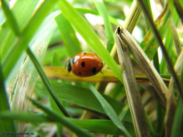 Фотография: IMG_1794.jpg, пользователя: Pillango