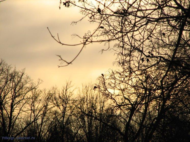 Фотография: IMG_3751.JPG, пользователя: Pillango