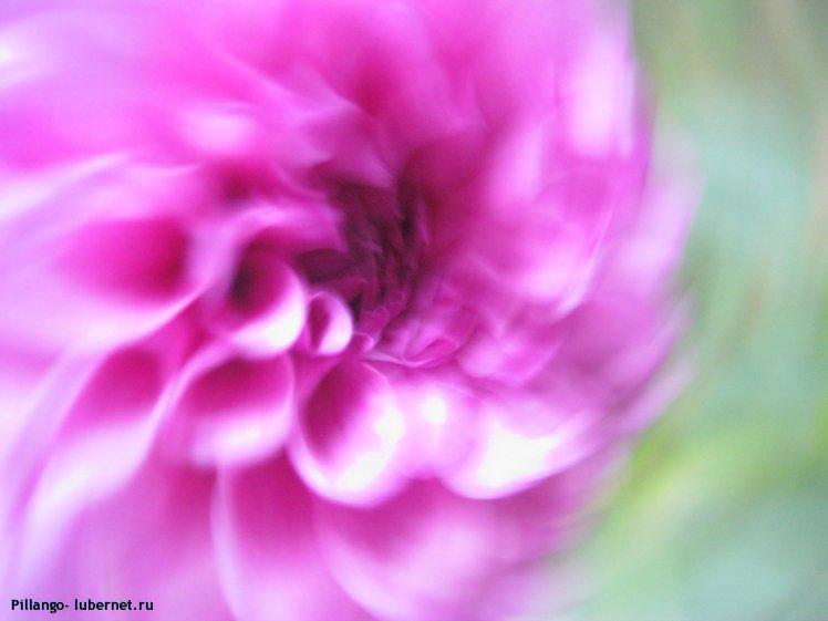 Фотография: IMG_1588.jpg, пользователя: Pillango