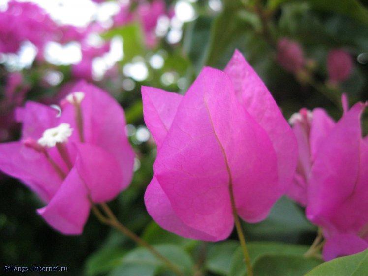 Фотография: IMG_2011.jpg, пользователя: Pillango