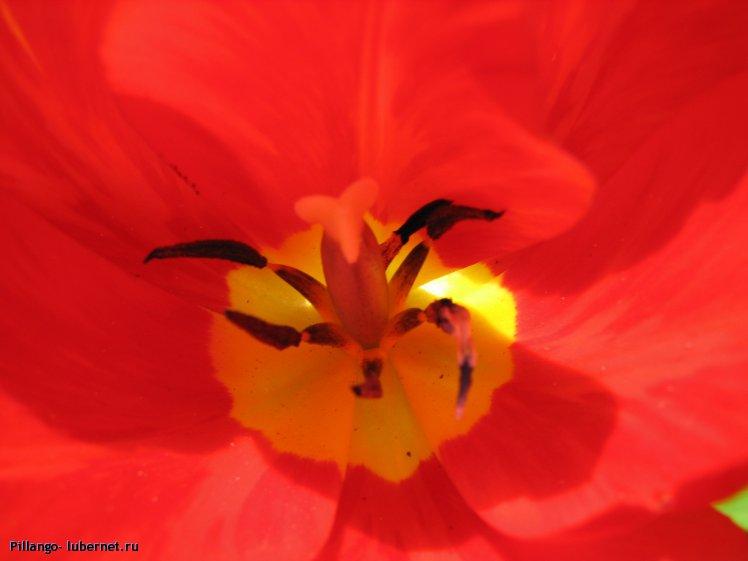Фотография: IMG_1688.JPG, пользователя: Pillango