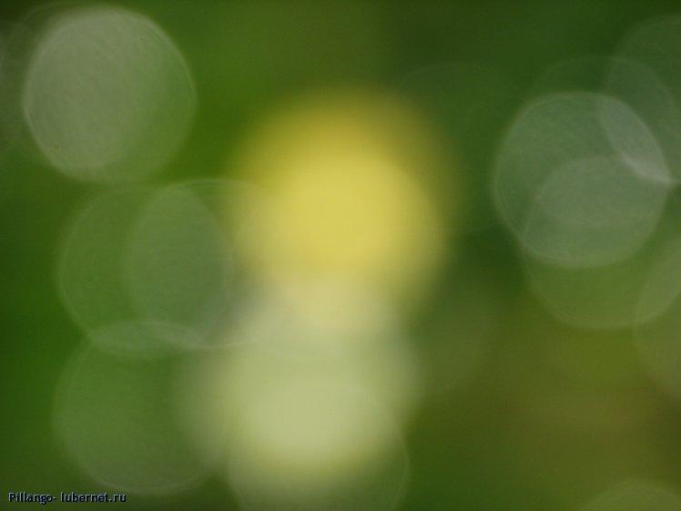 Фотография: IMG_2717.JPG, пользователя: Pillango