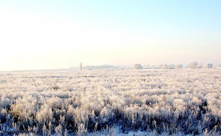 Фотография: Снежные хлеба.jpg, пользователя: Мекола