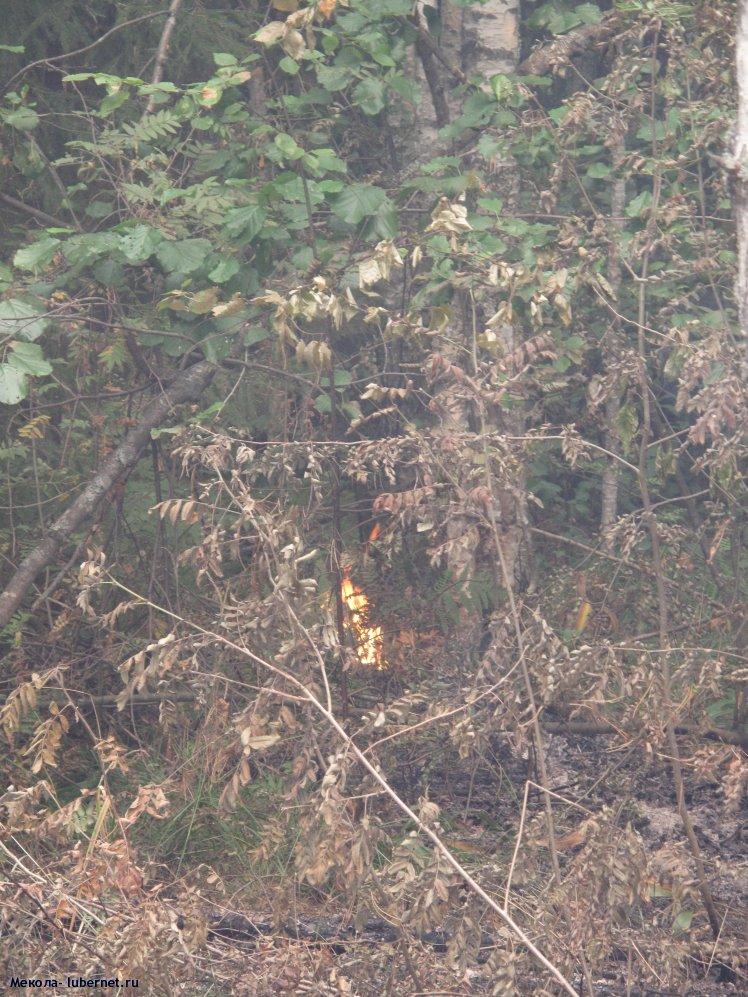 Фотография: Лесной пожар имеет мозг, ползет, разгорается, тухнет..., пользователя: Мекола