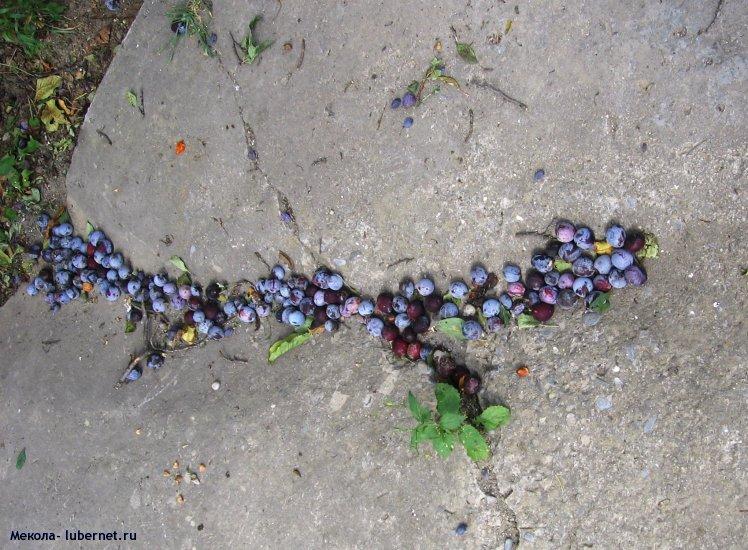 Фотография: Урожай в этом году хороший, пользователя: Мекола