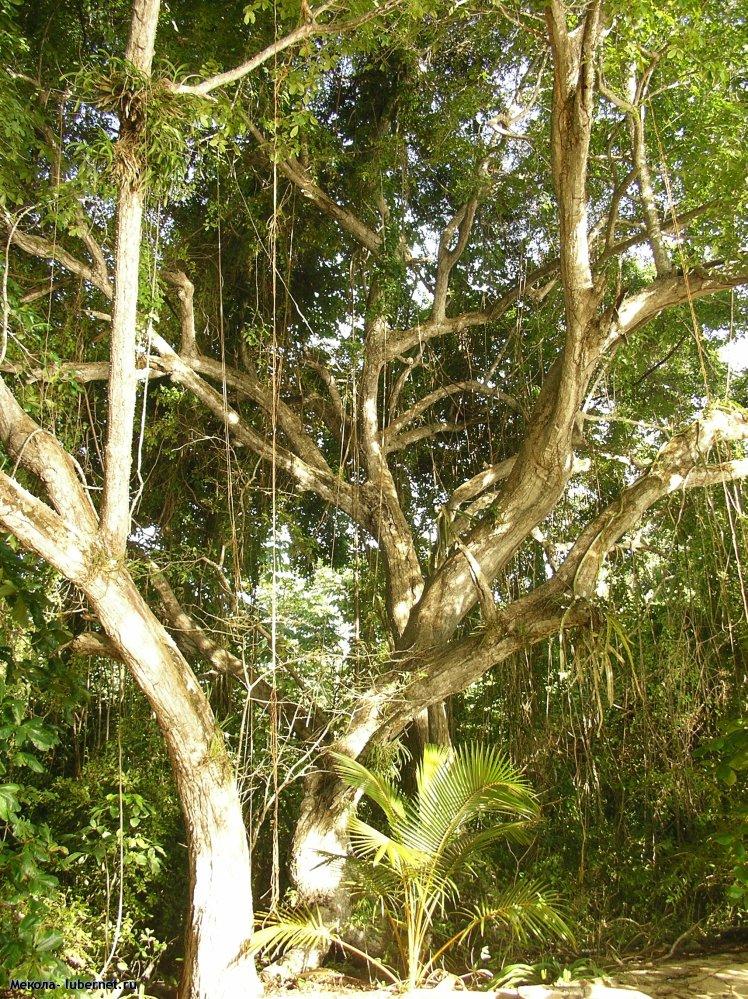 Фотография: джунгли, пользователя: Мекола