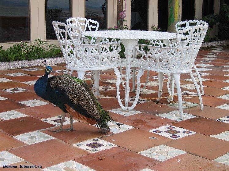 Фотография: Местные голуби, пользователя: Мекола