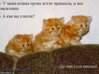 Фотография: img_4738044_5291_0.jpg, пользователя: Мекола