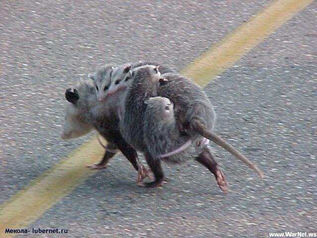 Фотография: мышь мама.jpg, пользователя: Мекола