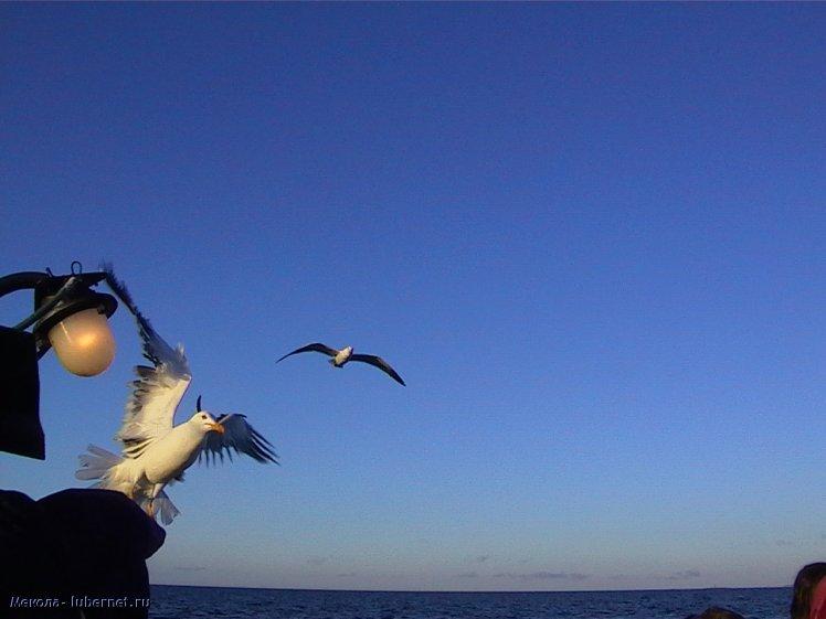 Фотография: птицы, пользователя: Мекола