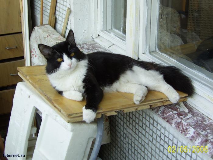 Фотография: Пропал кот, пользователя: Lorelay