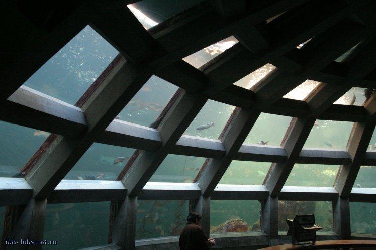 Фотография: В океанариуме, пользователя: Tais