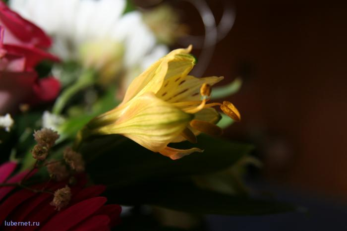 Фотография: красота внутри букета, пользователя: Tais