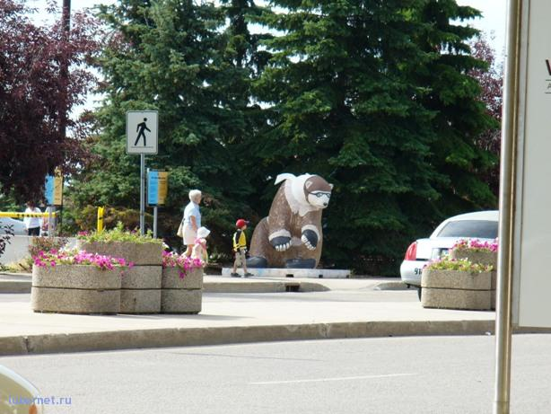 Фотография: last bear, пользователя: Tais