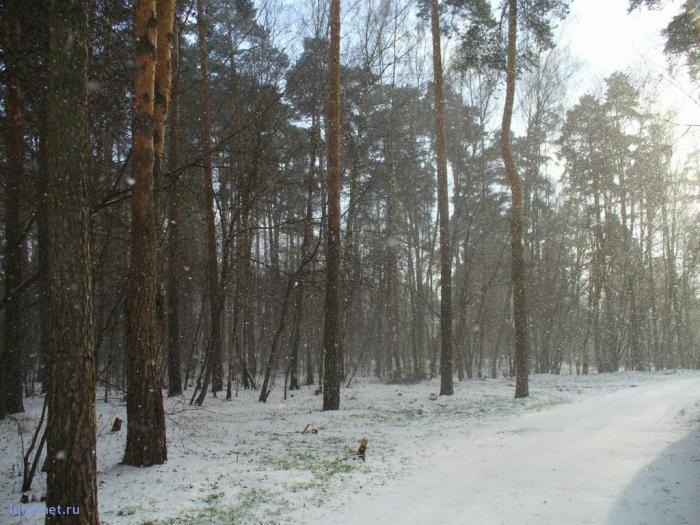 Фотография: первые снегопады_2, пользователя: Tais