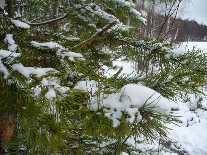 Фотография: 31 декабря - Золотово, пользователя: Tais