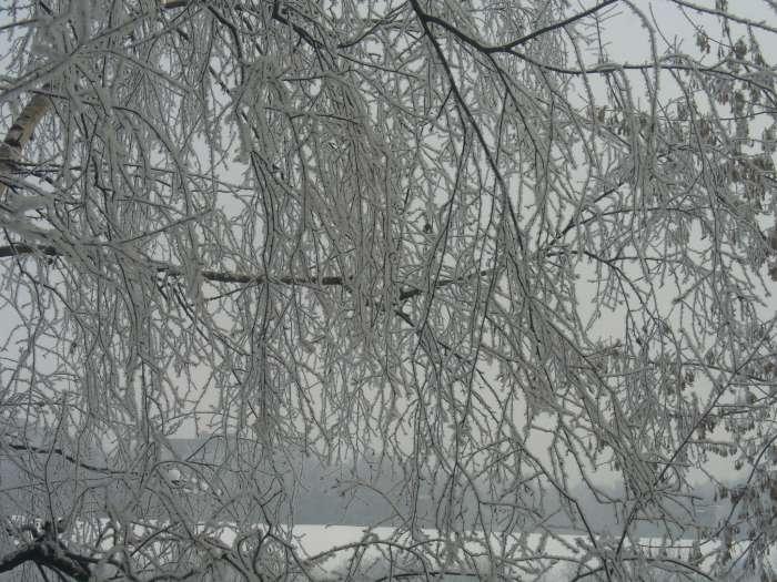Фотография: Заснеженные деревья, пользователя: Tais