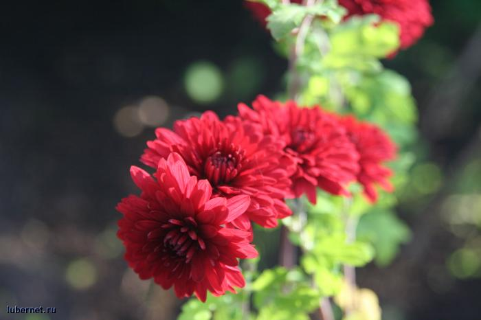 Фотография: цветочки:), пользователя: Tais