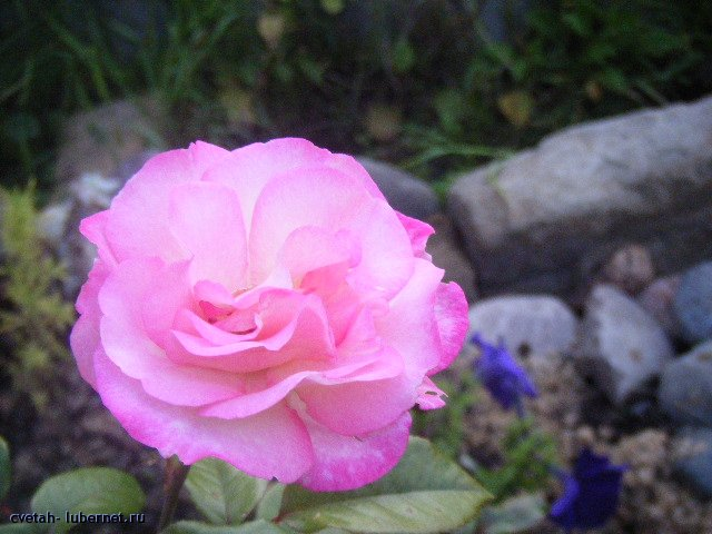 Фотография: Изображение 145.jpg, пользователя: cvetah