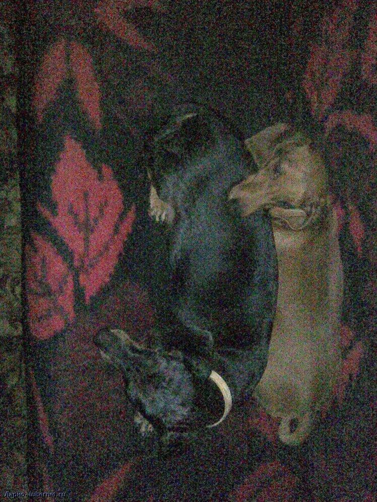 Фотография: Собаки.jpg, пользователя: Ларио