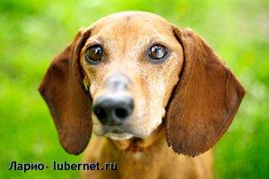 Фотография: гоша2.jpg, пользователя: Ларио