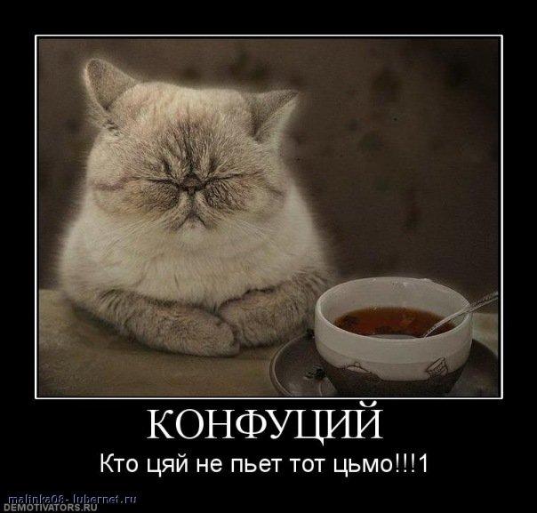 Фотография: кот и чай.jpg, пользователя: malinka08