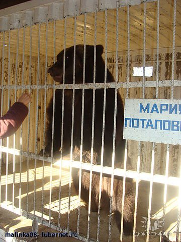 Фотография: Мишка в Мещере Мария Потаповна.jpg, пользователя: malinka08