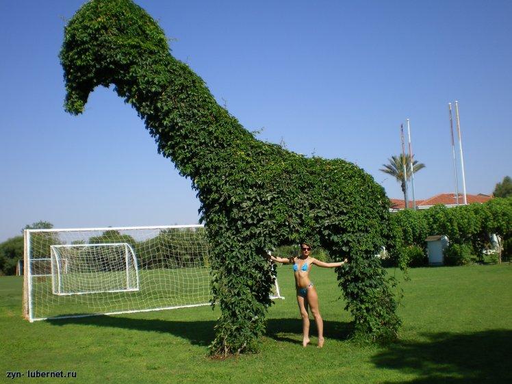 Фотография: Жираф большой-ему видней!, пользователя: zyn