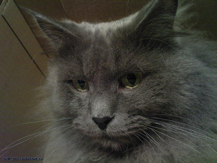 Фотография: Мой кот.jpg, пользователя: SUN_StiL