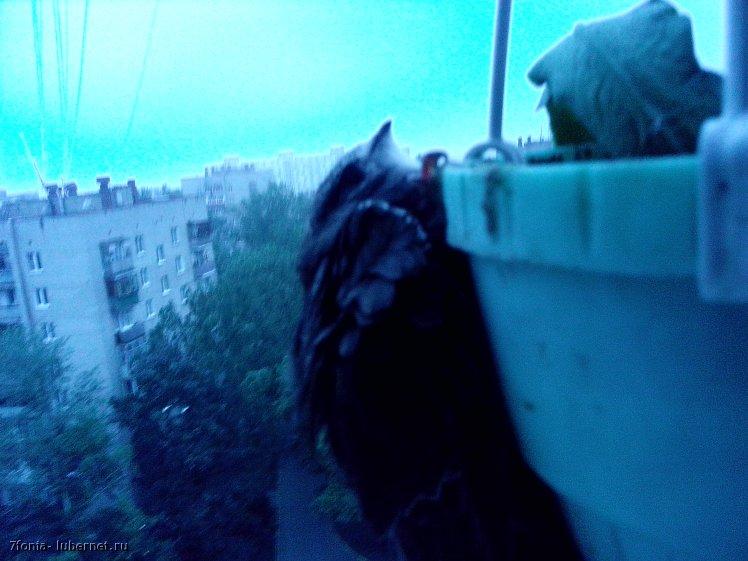 Фотография: IMG_20130731_055900.jpg, пользователя: 7fonia