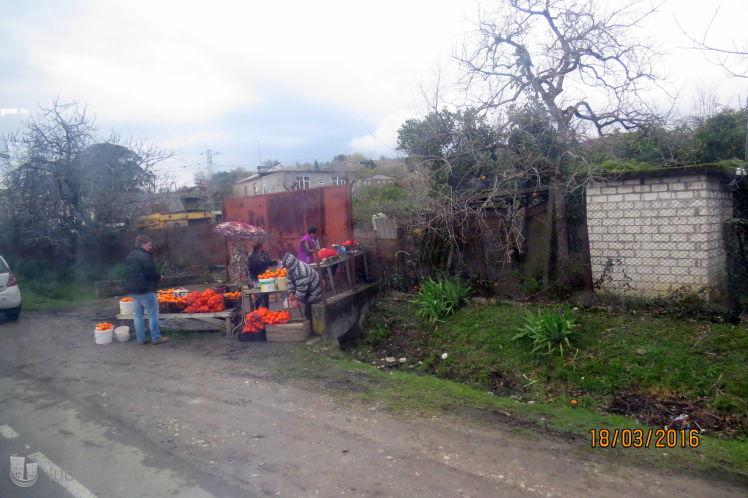 Фотография: Весенний урожай апельсинов в Абхазии, пользователя: 7fonia