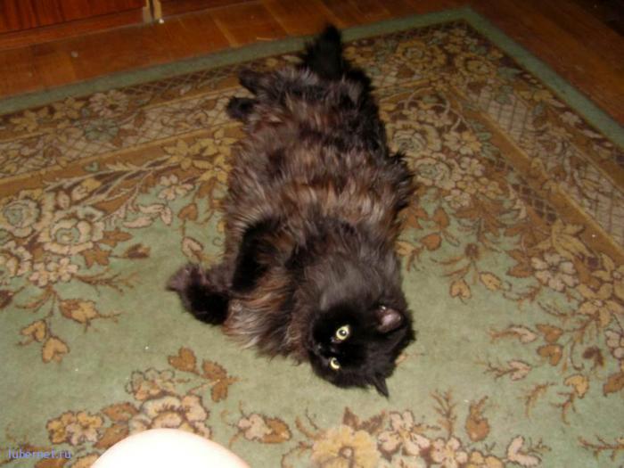 Фотография: Моя котомодель! Мужчина в расцвете сил!, пользователя: 7fonia